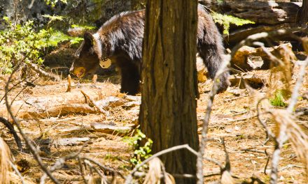 Yosemite, CA July 2020